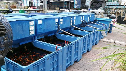Gartenteich braun gmbh teichfische fr sche molche Teichfische deutschland