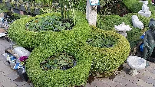 Gartenteich braun gmbh pflanzk rbe und zubeh r for Zierfisch teich